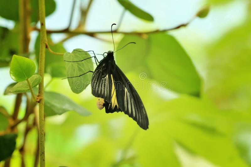 Beau papillon dans le jardin photos libres de droits