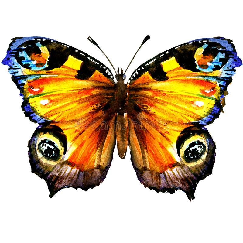 Beau papillon de paon européen avec les ailes ouvertes, vue supérieure, d'isolement, illustration d'aquarelle sur le blanc illustration libre de droits