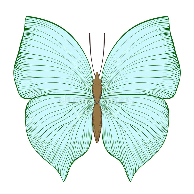 Beau papillon de vert de vintage d'isolement sur le fond blanc illustration stock