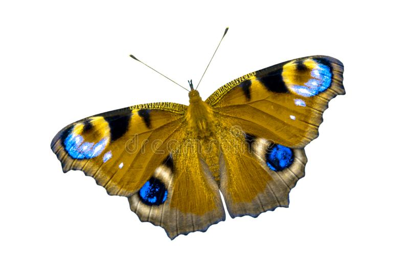 Beau papillon multicolore avec les ailes ouvertes Le papillon est isolé sur la vue supérieure de fond blanc, aucune ombre photos libres de droits