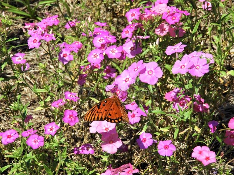 Beau papillon orange sur un wildflower photographie stock libre de droits