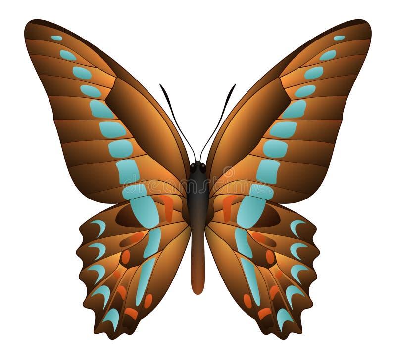 Beau papillon sur un fond blanc illustration de vecteur