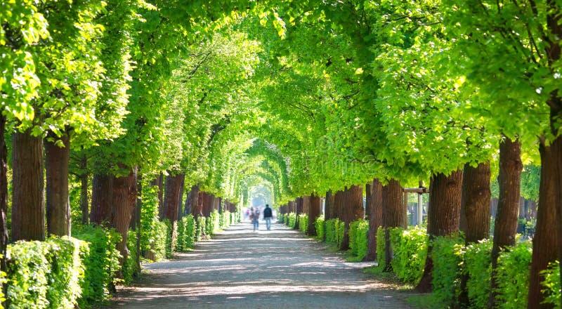 Beau parc autour de palais de Schonbrunn ? Vienne, Autriche photos stock