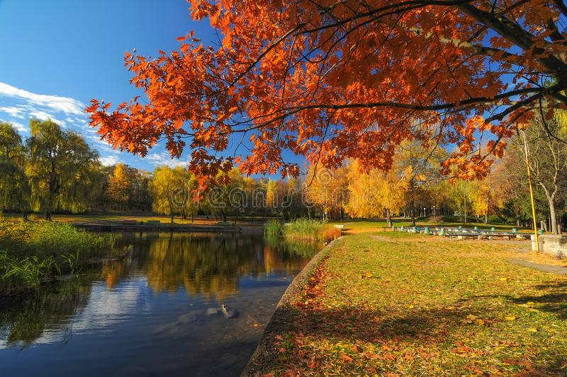 Beau parc avec les arbres colorés Paysage de nature d'automne photographie stock libre de droits