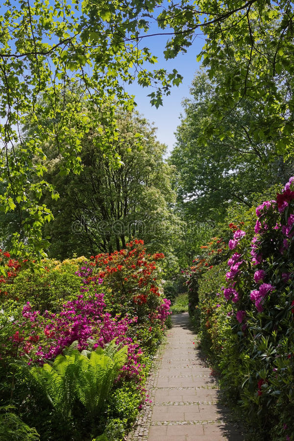 Beau parc avec les rhododendrons et la fougère image stock