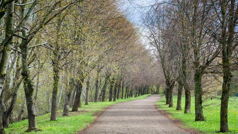 Beau parc d'allée au printemps image libre de droits