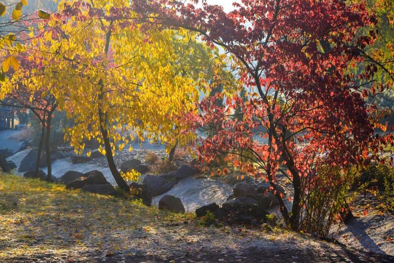 Beau parc d'automne avec les arbres rouges et jaunes colorés photo stock