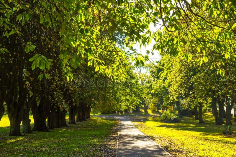 Beau, parc de ressort avec l'allée de vieux arbres image stock