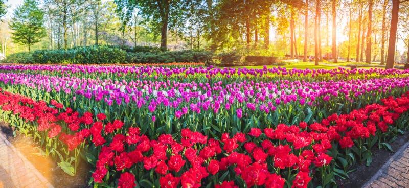 Beau parc de ressort avec les fleurs multicolores images stock