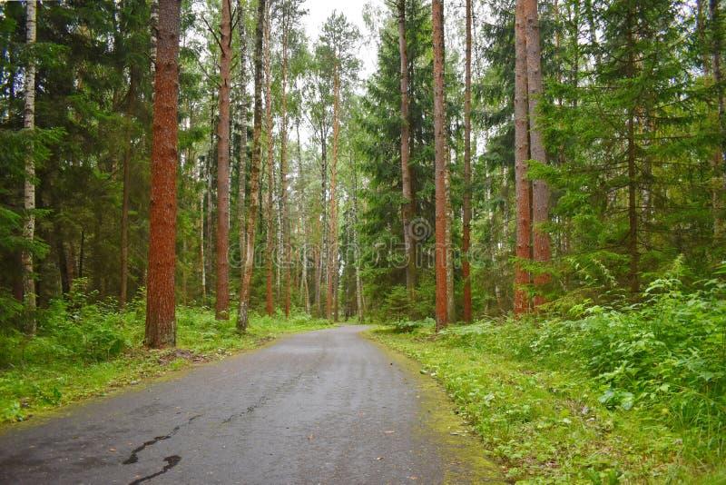 Beau parc magique avec des arbres images stock