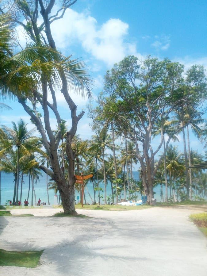 Beau parc tropical par la mer image stock