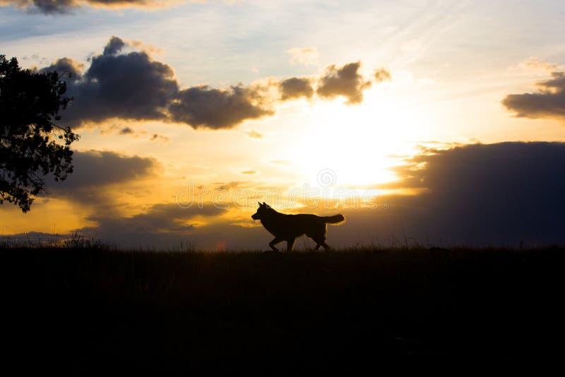 Beau paysage au coucher du soleil avec le loup de bois de construction photo libre de droits