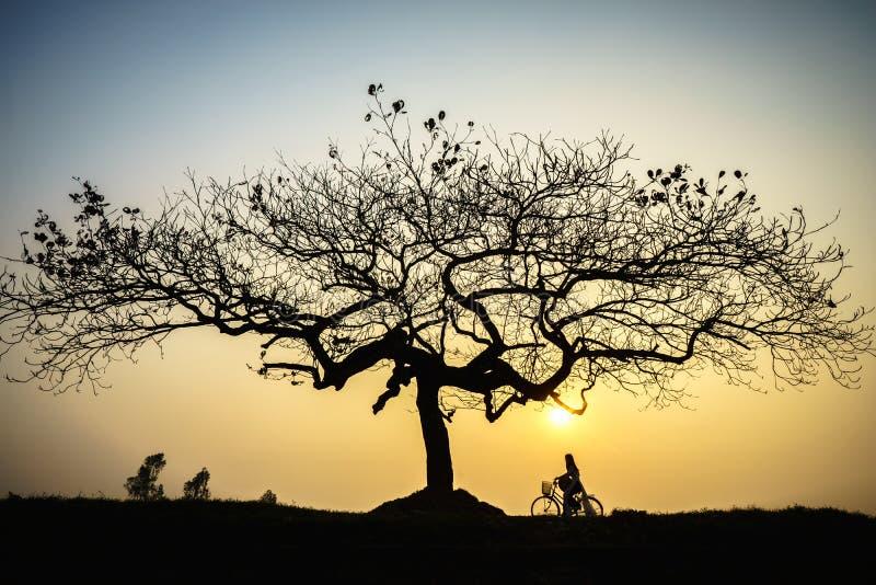 Beau paysage avec la silhouette d'arbres au coucher du soleil avec la femme vietnamienne portant la robe traditionnelle ao Dai se image libre de droits