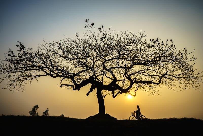Beau paysage avec la silhouette d'arbres au coucher du soleil avec la femme vietnamienne portant la robe traditionnelle ao Dai se photo stock