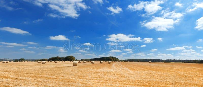 Beau paysage avec le champ et le ciel de seigle photographie stock