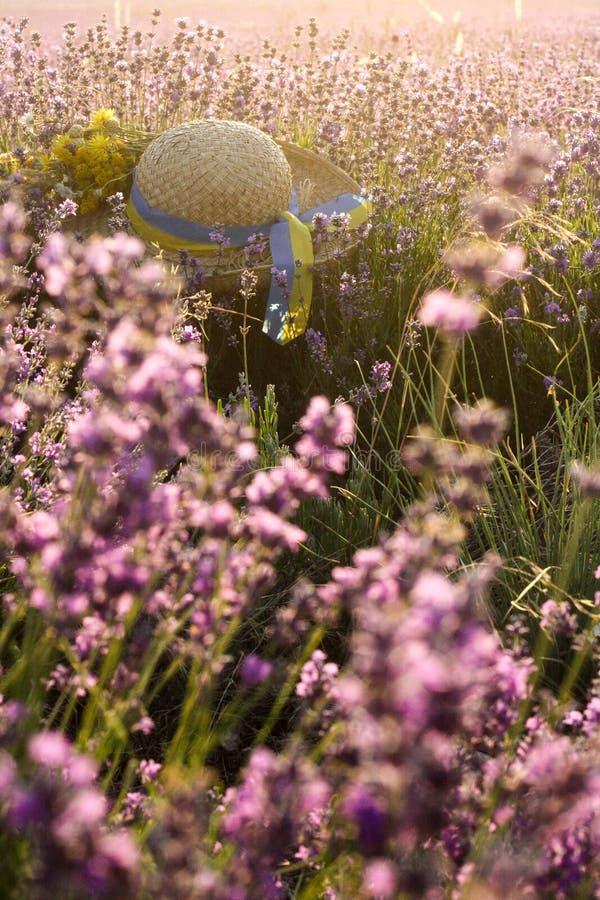 Beau paysage avec le gisement et le chapeau de paille violets de lavande image libre de droits