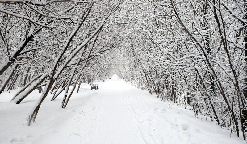 Beau paysage avec un chemin couvert de neige droit шn le parc parmi les arbres le jour d'hiver image libre de droits