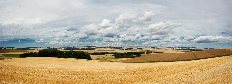 Beau paysage d'été avec des champs de seigle photos stock