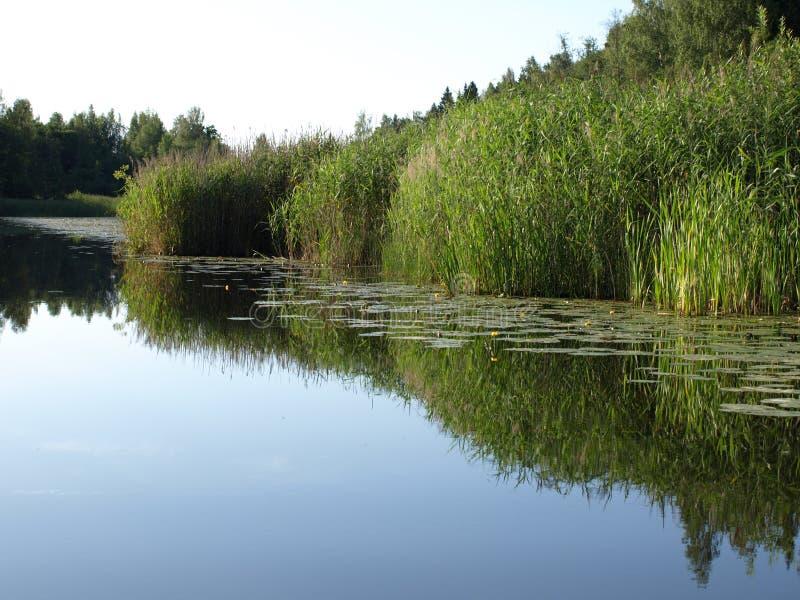 Beau paysage d'été avec le lac calme, prés, photographie stock libre de droits