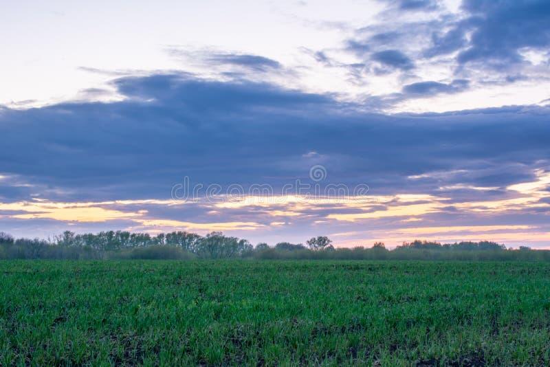 Beau paysage d'été : coucher du soleil, arbres, herbe verte fraîche, forêt, champs, prés et ciel Ciel magnifique et rouge avec le image stock