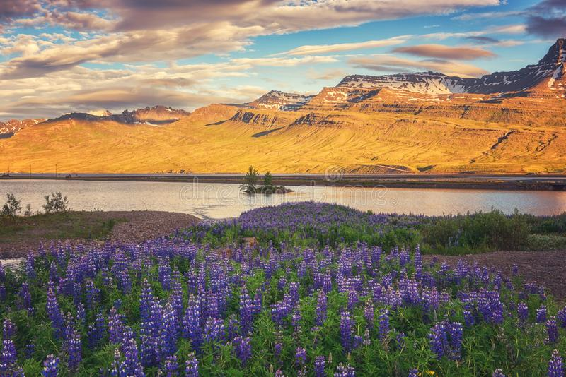 Beau paysage d'été, coucher du soleil au-dessus des montagnes et vallée fleurissante, campagne de l'Islande photo stock