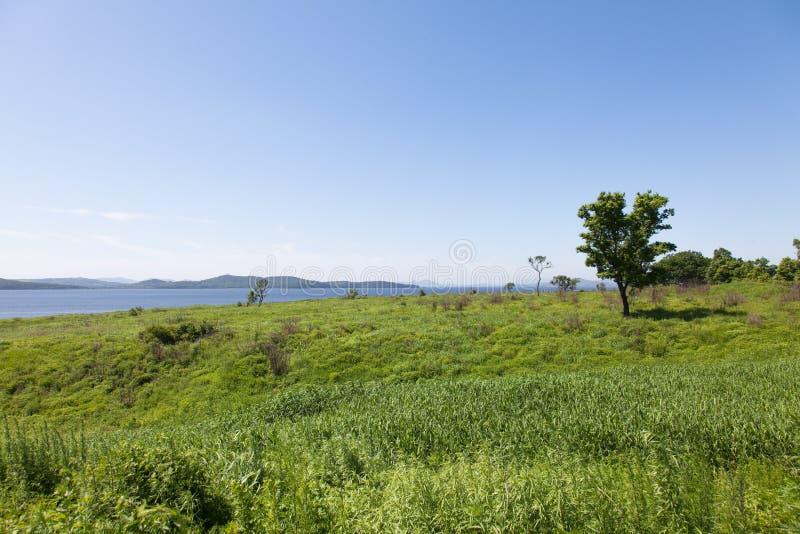 Beau paysage d'été des prés avec des arbres Arbres isolés sur une colline verte contre le ciel bleu image stock