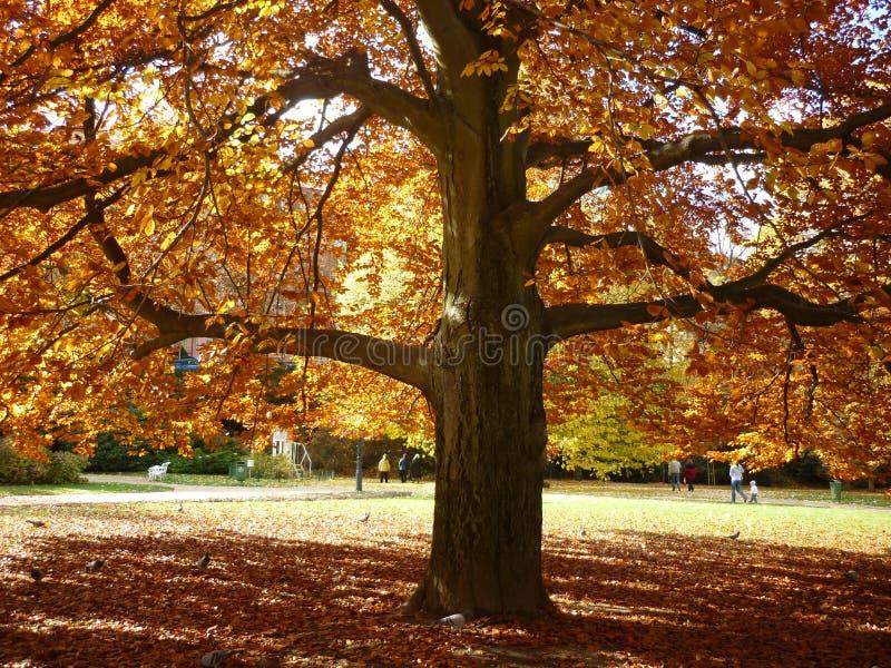 Beau paysage d'automne photographie stock libre de droits