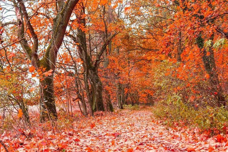 Beau paysage d'automne avec la ligne des arbres et et une route en parc, Ecosse photos stock