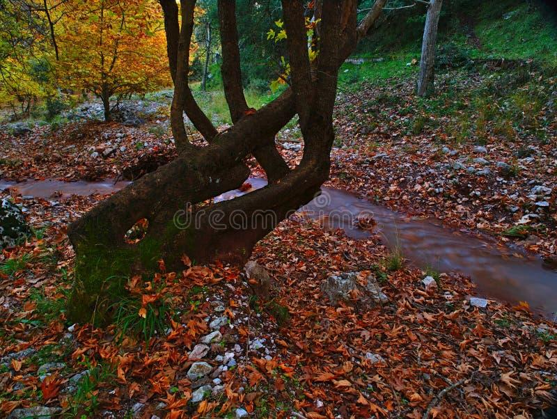 Beau paysage d'automne de Planitero dans Kalavryta, Gr?ce images libres de droits