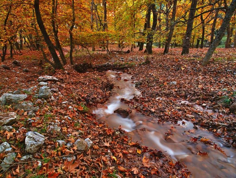 Beau paysage d'automne de Planitero dans Kalavryta, Gr?ce photo libre de droits