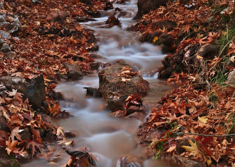Beau paysage d'automne de Planitero, dans Kalavryta, la Gr?ce Image color?e vive et vibrante de chute Crique dans l'arbre plat de photos stock