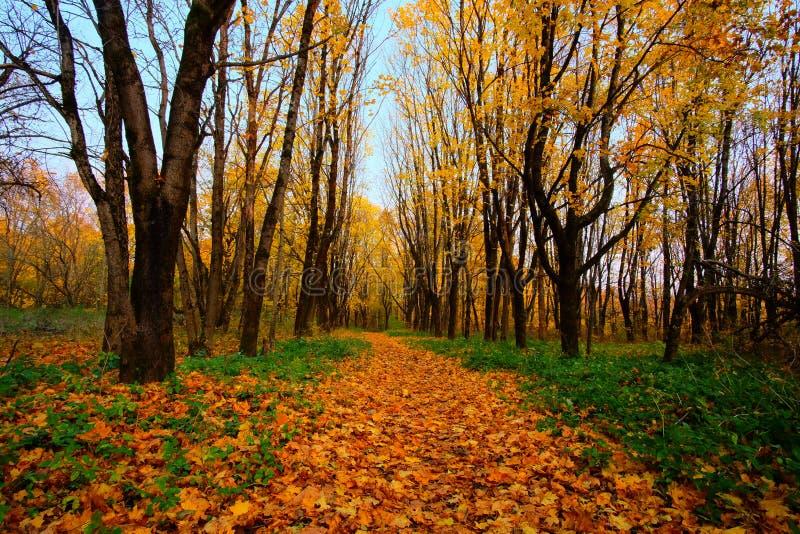 Beau paysage d'automne en parc image stock