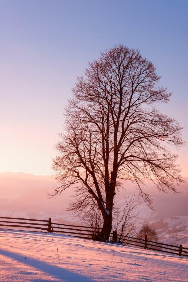 Beau paysage d'hiver avec l'arbre simple dans la lumière molle de coucher du soleil photos stock