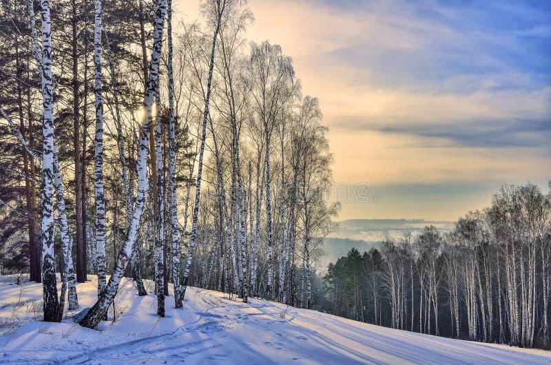 Beau paysage d'hiver de matin dans la forêt de bouleau et de pin de montagne image stock