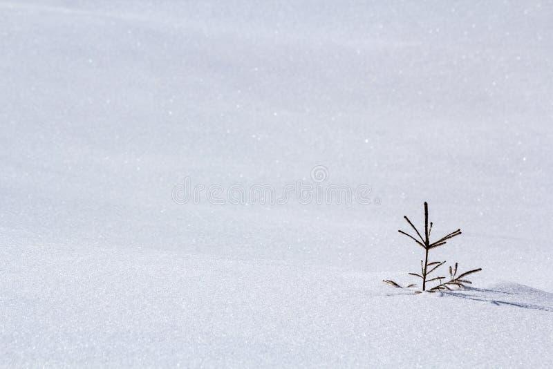 Beau paysage d'hiver de Noël Petite jeune offre verte f image stock