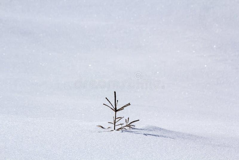 Beau paysage d'hiver de Noël Petite jeune offre verte f photos stock