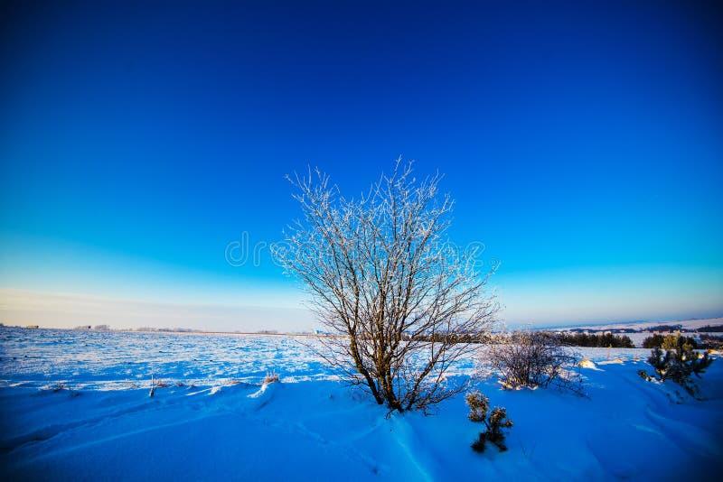 Beau paysage d'hiver image libre de droits
