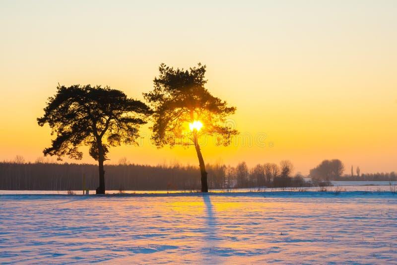 Beau paysage de champ d'hiver photographie stock