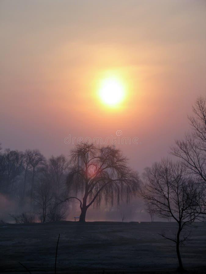 Beau paysage de coucher du soleil avec les saules près du lac Arbres dans la brume photos stock