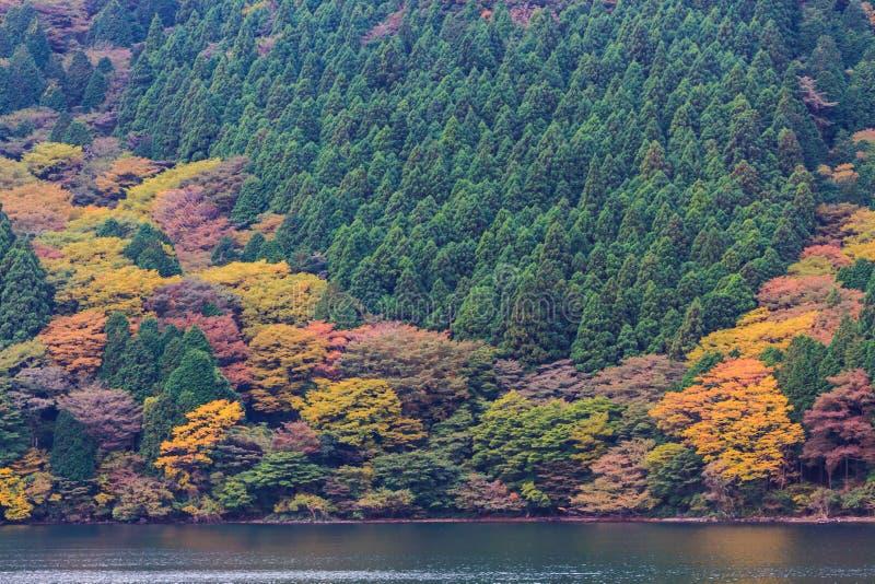 Beau paysage de couleurs de feuilles d'automne image stock