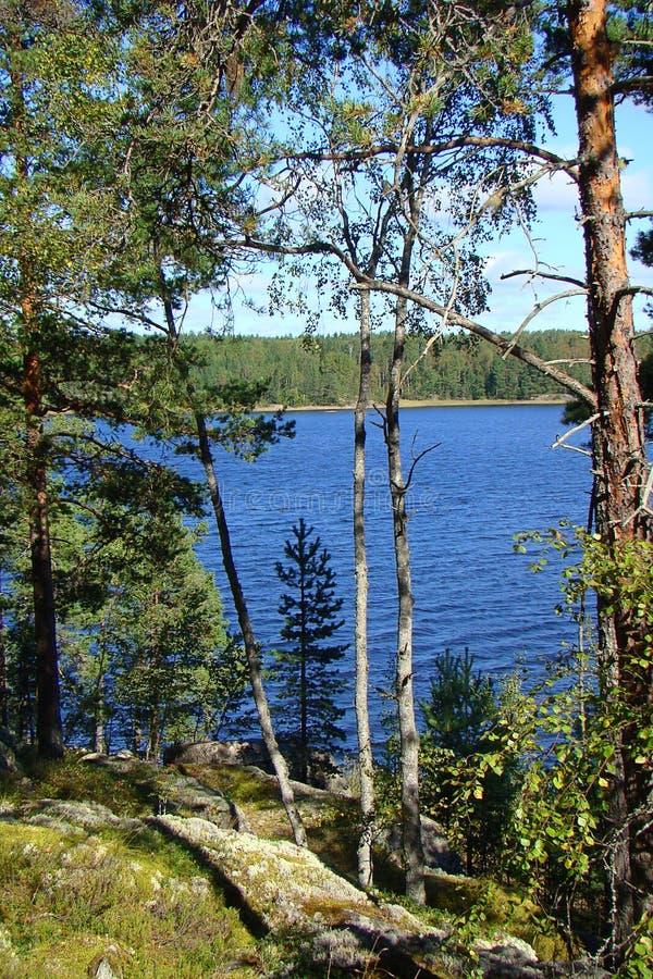 Beau paysage de forêt avec des pins verts et un lac par les branches images stock