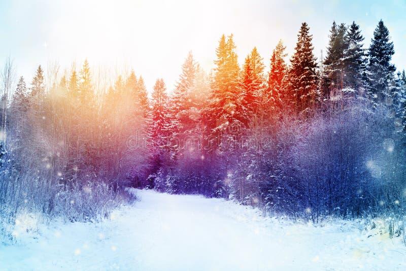 Beau paysage de forêt d'hiver avec le vol et le bokeh de neige photographie stock libre de droits