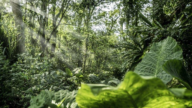 Beau paysage de forêt de montagne à avec les coupures de rayons du soleil par les arbres photo libre de droits