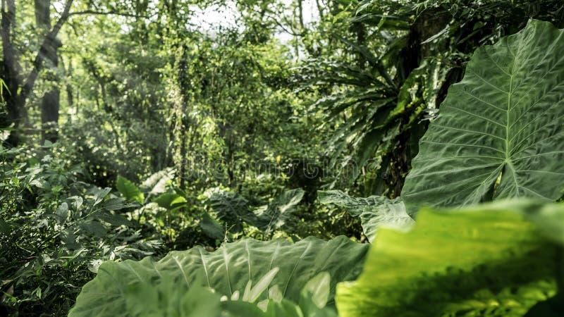 Beau paysage de forêt de montagne à avec les coupures de rayons du soleil par les arbres image libre de droits