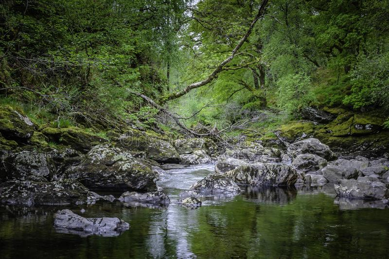 Beau paysage de l'Ecosse, R-U Courant avec des roches et arbre tomb? dans la for?t photos stock