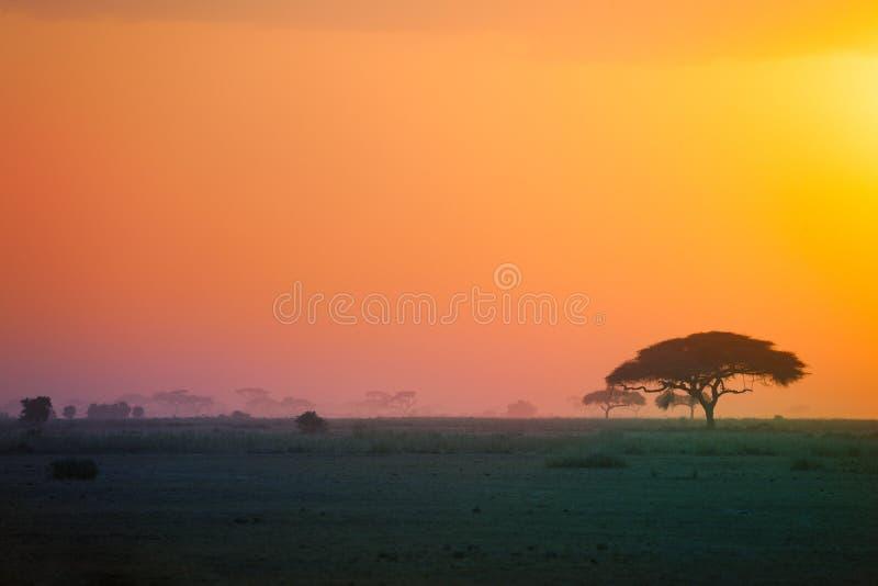 Beau paysage de la savane africaine au coucher du soleil image libre de droits