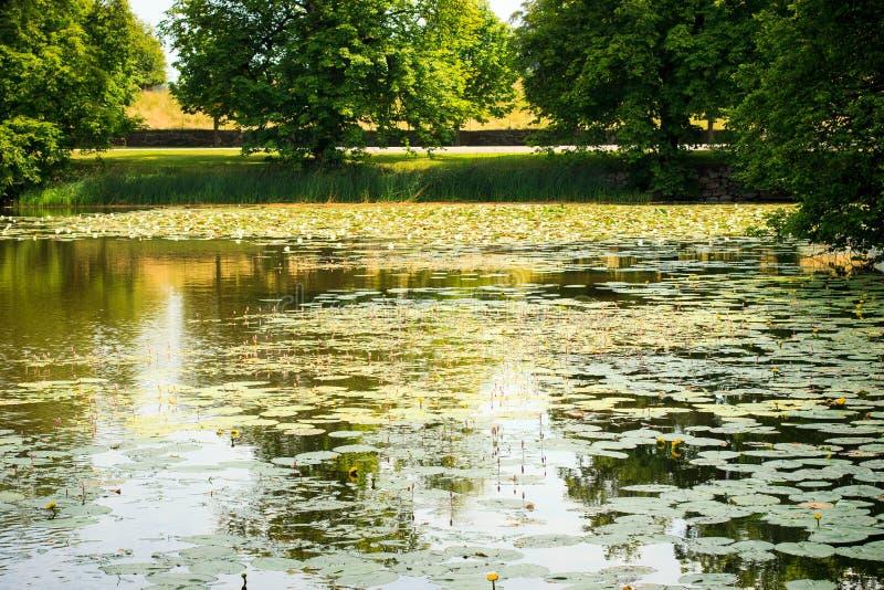 Beau paysage de lac en Suède images libres de droits