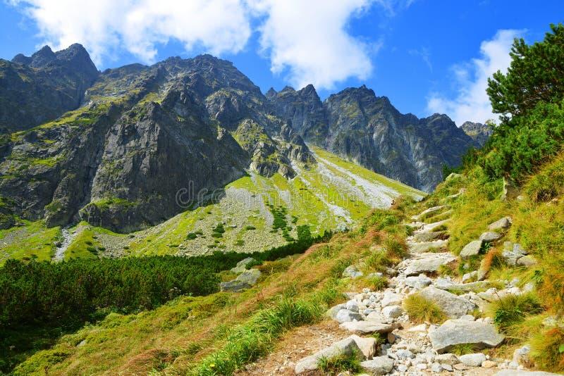 Beau paysage de montagne d'été dans Carpathiens occidentaux image stock
