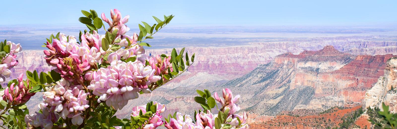 Beau paysage de montagne d'été en Arizona image stock