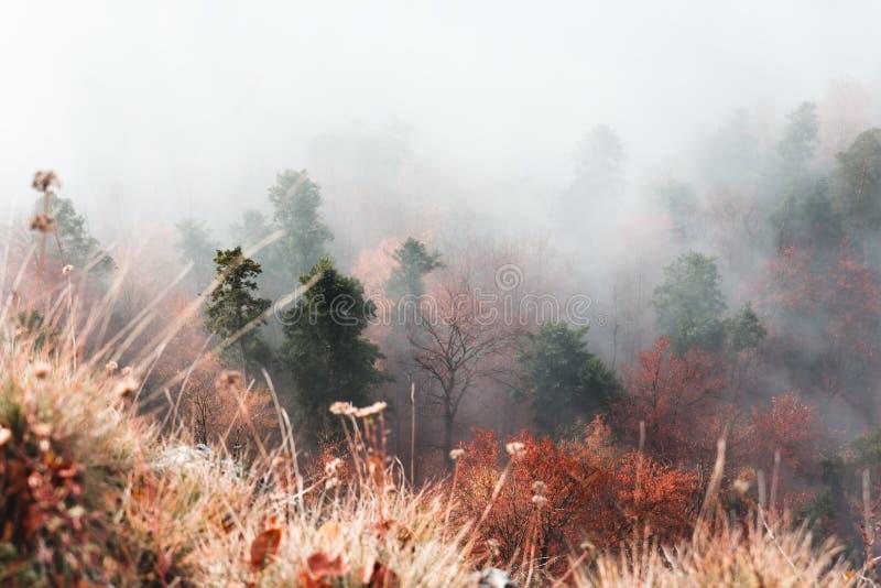 Beau paysage de montagne d'automne, arbres en brouillard, devant h photo stock